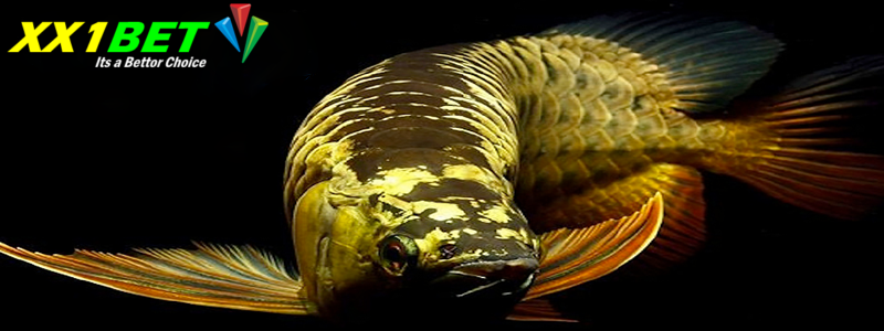 Trik Menang Bermain Permainan Ikan